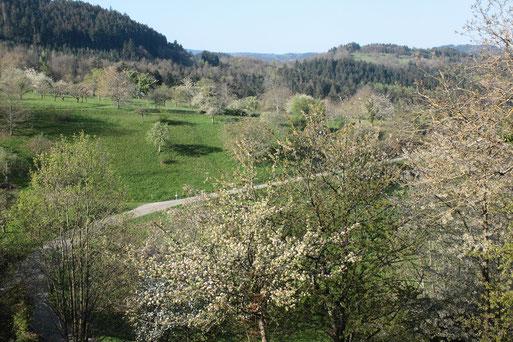 Streuobstwiesen bei Loffenau (G. Franke, 19.04.2019)