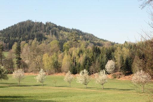 Osterspaziergang bei Bernbach (Bad Herrenalb) (G. Franke, 13.04.2020)