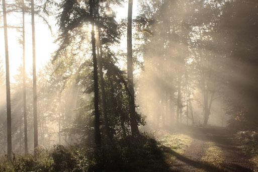 bei Dennach - Hang zum Enztal - Morgensonne und Nebelschwaden (G. Franke, 03.10.2019)