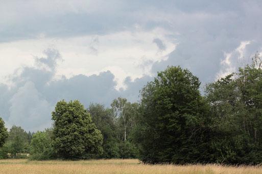 bei Karlsbad-Spielberg - unbeständiges Juniwetter (G. Franke, 16.06.2020)