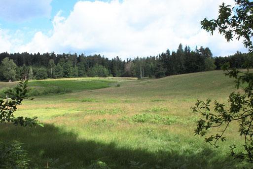 Waldwiese zwischen dem Moosalbtal, Völkersbach und Freiolsheim (G. Franke, 03.07.2020)