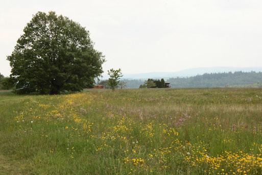 am Waldrand oberhalb von Völkersbach - für kurze und lange Wanderungen gibt es hier schöne Wege zwischen Völkersbach, Malsch und Freiolsheim (G. Franke, 15.05.2020)