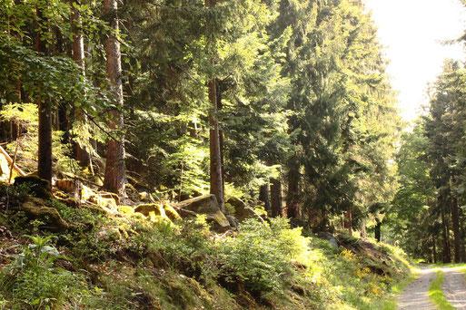 unterwegs bei Dobel - auf dem Reyschacherbergweg, Eyachtalhang (G. Franke, 10.05.2020)