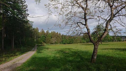 Eine zu empfehlende Wanderung in der Nähe von Karlsbad: ab Conweiler Tennisplatz - Axtbachtal - oberhalb von Langenalb und dann Richtung Holzbachtal, Dennach und zurück - Blick oberhalb Langenalb (G. Franke, 01.05.2020)