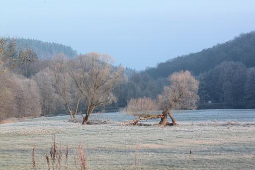Morgensonne im Januar im Albtal zwischen Fischweier und Marxzell (G. Franke 14.01.2018)
