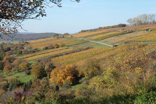 Weinberge im Herbst - Keltern