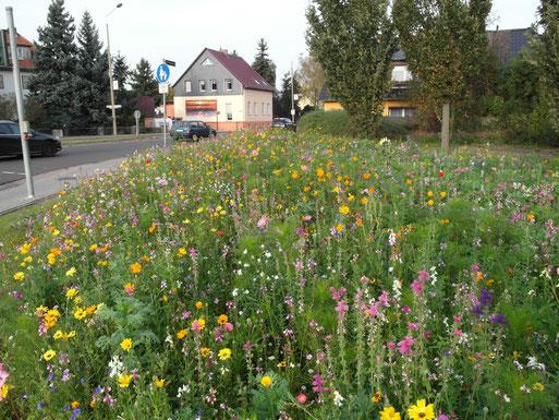 Herbst 2014 - an der Kreuzung in Neuschmerzke vom Stadtgartenamt angelegte Wildblumewiese, © Foto: Bodo Rudolph