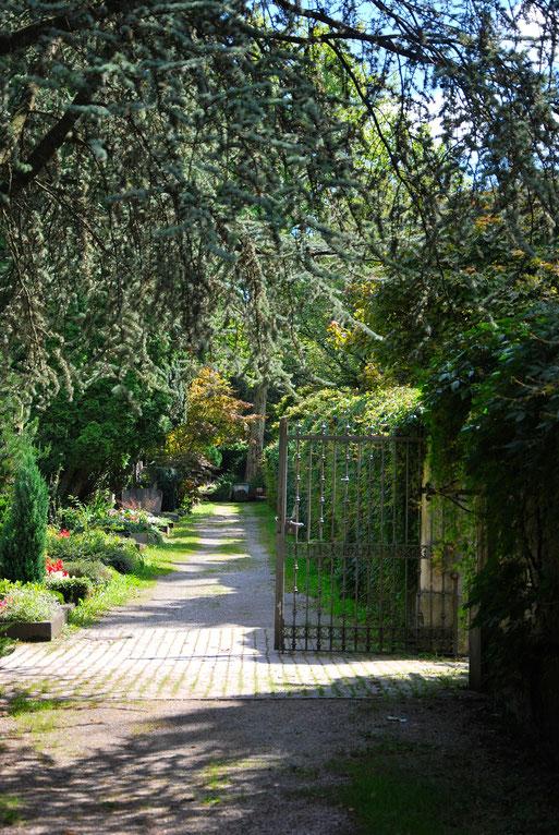 Bild: Hauptfriedhof Efeu Südmauer Naturschutz Vogelschutz