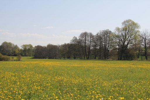 Feuchtgebiete am Ilvesbach ;    Foto: R.Barg