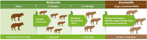 Rudelstruktur (Quelle: NABU)