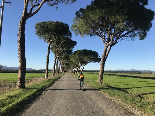 Rennrad, Urlaub, Toskana: Wir fahren die schönsten Straßen, die tollsten Berge, wir genießen alles, was uns geboten wird! Beispiel hier: Es schneckt sich eine Wahnsinnsstraße über Hügel und Tal und hoch und runter, und irgendwann kommt der Uralt-Ort.