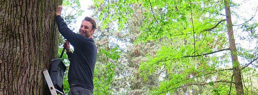 Christopher Paton hängt einen Fledermauskasten auf