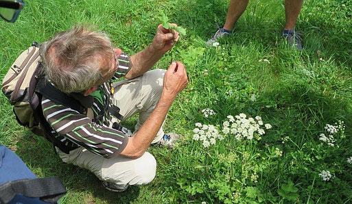 "Volker Violet an der ""Rendevouz-Blume"""
