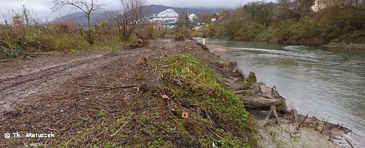 Hier stand vor Kurzem noch undurchdringliches Gebüsch, hauptsächlich aus Weiden. Die wichtigsten Futterplätze der Biber sind der Kettensäge zum Opfer gefallen.