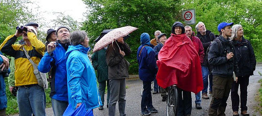 Teilnehmer an der NABU-Exkursion am 3. Mai 2015 am Bahndamm. Foto: Isabel da Silva