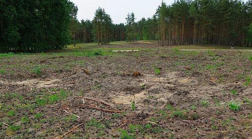 Die gerodeten Flächen im Mai 2015. Foto: Maike Petersen