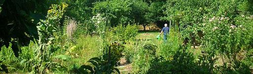Ein vogelfreundlicher Naturgarten - der NABU-Garten in Handschuhsheim. Foto: Hanne Knickmann