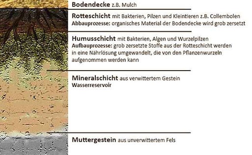 Die verschiedenen Bodenschichten (modifiziert nach hypersoil.uni-muenster.de )