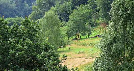 Petersetal bei Dossenheim, Foto: Maike Petersen