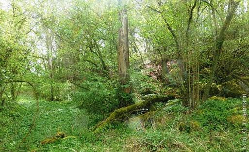 NABU-Urwald an der Rother Hecke