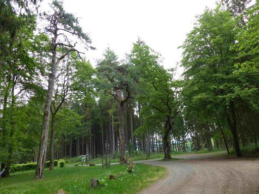 Adam und Eva im Sommer 2020. Paradoxer Weise ist die Fläche unter den Bäumen so gestaltet, dass sie zum Verweilen einlädt. Foto Clemens Hackenberg