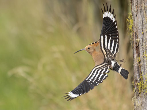 Das Rotkehlchen - Vogel des Jahres 2021 - Foto: Hubertus Schwarzentraub