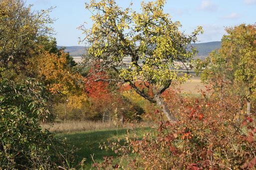 Blick Richtung Feuerbach; Oktober 2016