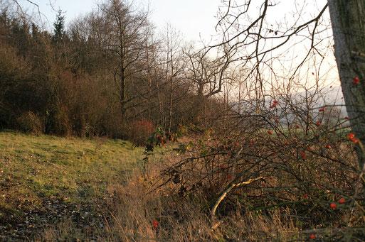 Am Westhang des Ostheimer Wäldchens; Dezember 2016