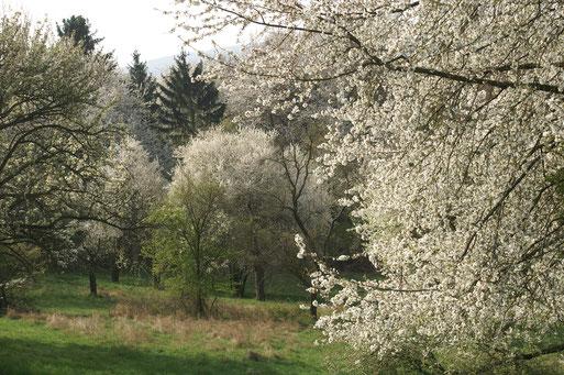 Frühling oberhalb des Fauerbachteichs; April 2017