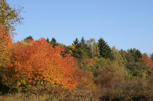 Märzberg im Farbenrausch; Oktober 2017