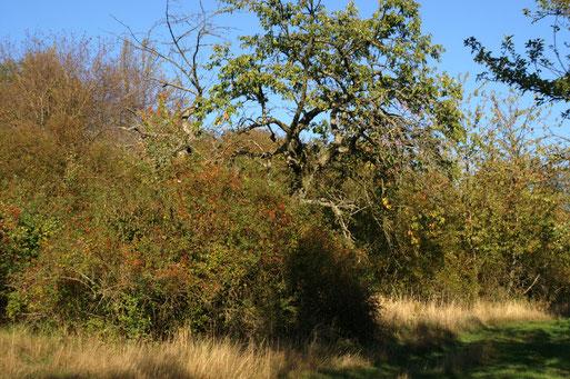 Herbstimpressionen; September 2015