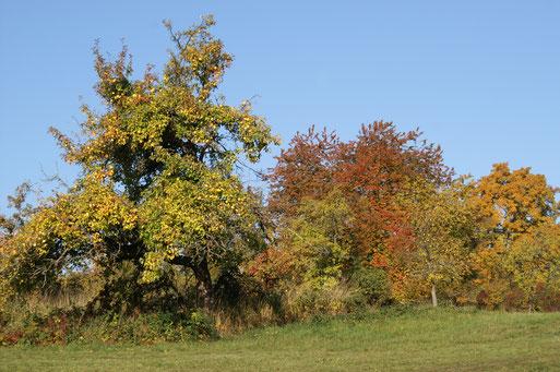 Bunter Herbst; Oktober 2017