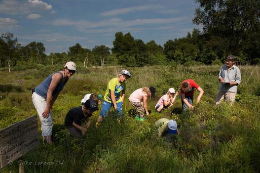 4. Juli: GEO-Tag auf dem NABU-Gelände im Loyer Moor, Foto S. Lorenz