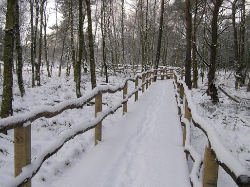 Wie wäre es mit einem Gutschein für einen romantischen Spaziergang durch das Große und Weiße Moor?