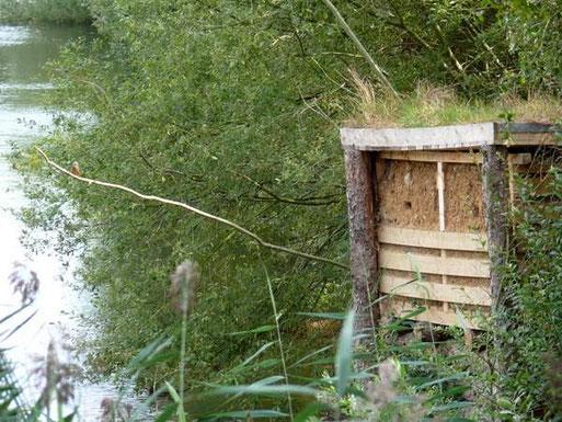 Hier ein Doppel-Brutcontainer für so genannte Schachtelbruten, die der Eisvogel gerne macht. Während in einem Nest noch gefüttert wird, beginnen die Vögel im zweiten Nest schon wieder zu brüten