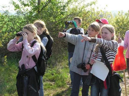 Vogelbeobachtungen durchgeführt