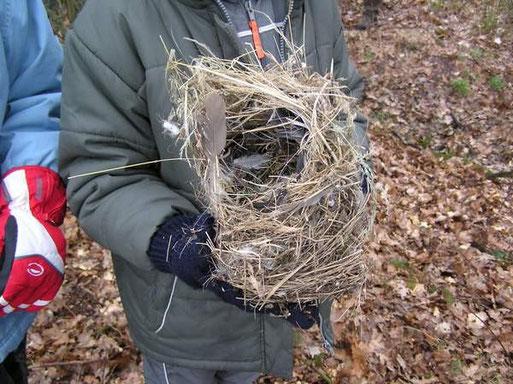und im Herbst die Nester gereinigt und die Vogelarten bestimmt, die darin genistet hatten.