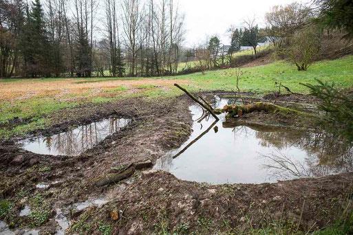 Nach dem Freistellen und dem Entschlammen entsteht eincideales Amphibiengewässer.