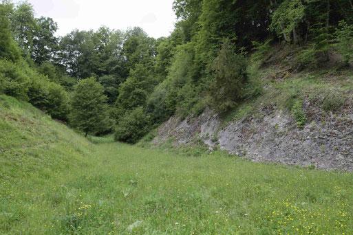 Kalksteinbruch Schönenberg (Wiebke Dallmeyer-Böhm)