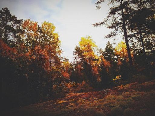 suède automne bigousteppes forêt arbres