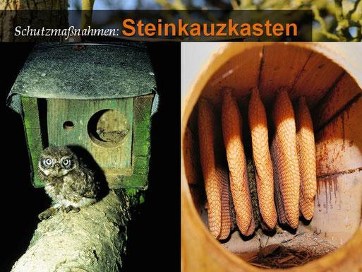 Steinkauz juv., Foto: Herbert Friedrich; Honigbienenwaben, Foto: Marcel Weidenfeller