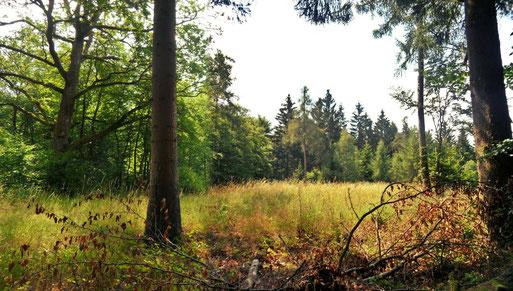 Naturwaldreservat Lützelrech (Soonwald)