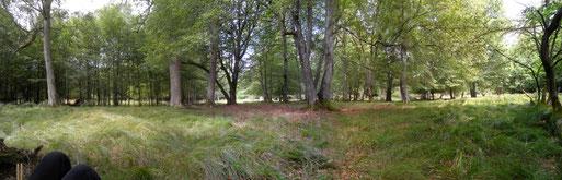 Naturwaldreservat Schwabbelbruch (Soonwald)
