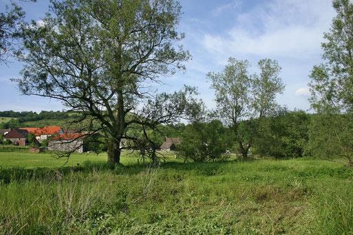 """NABU-Schutzgebiet """"Quellwiese bei Merxhausen"""""""