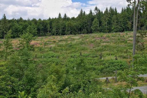 "NABU-Schutzgebiet ""Kyrill-Fläche Langentalskopf"""