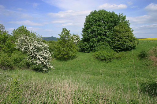 """NABU-Schutzgebiet """"Blums Grund"""""""