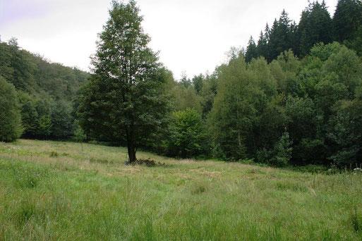 """NABU-Schutzgebiet """"An der Tränke"""" bei Mühlenberg"""