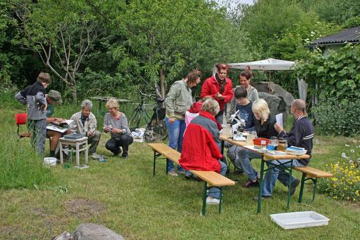 Beim Geo- Tag 2010 wurde u.a. das Leben im Teich erforscht