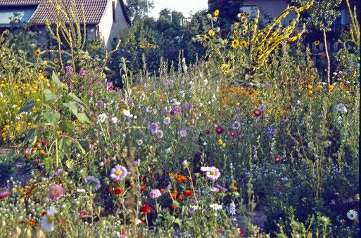 Garten- und Wildblumen entsprechen den Bedürfnissen der heimischen Tierwelt