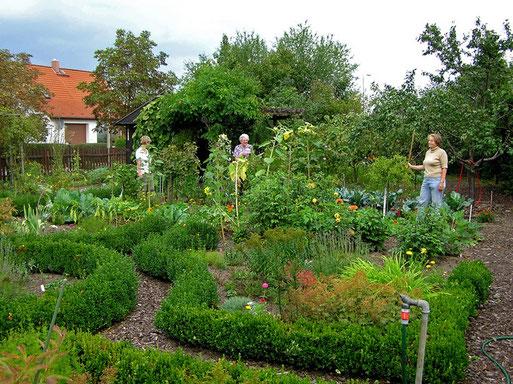 In der Regel treffen sich die Gartenfreunde einmal pro Woche zum gemeinsamen Arbeiten und Ernten